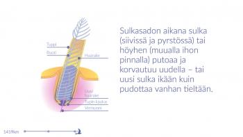 http://aunisahonen.com/files/gimgs/th-51_51_aunis-ahonen-muuttomatka4_v2.jpg